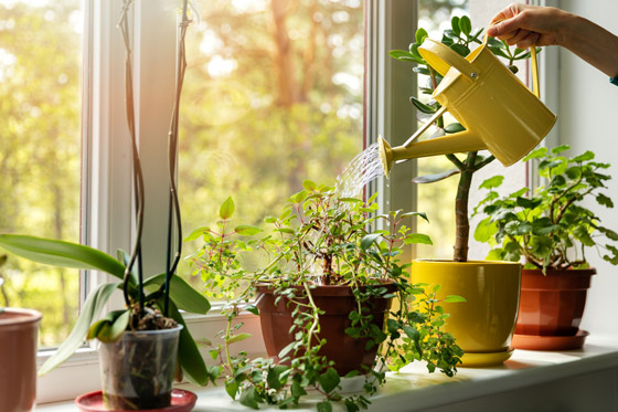 صورة رقم 4 - تموت نباتاتك رغم حرصك على العناية بها؟ 5 أخطاء شائعة قد تكون السبب!