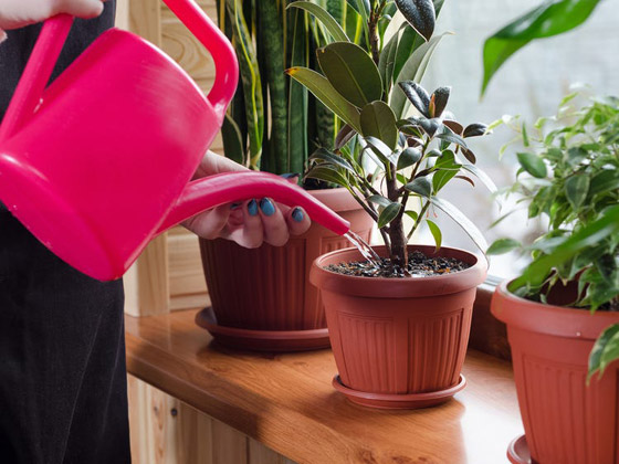 صورة رقم 6 - تموت نباتاتك رغم حرصك على العناية بها؟ 5 أخطاء شائعة قد تكون السبب!