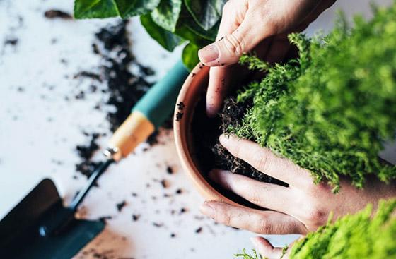 صورة رقم 8 - تموت نباتاتك رغم حرصك على العناية بها؟ 5 أخطاء شائعة قد تكون السبب!