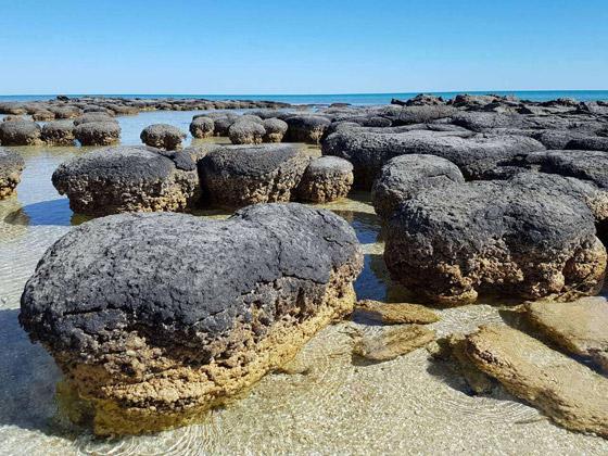 صورة رقم 1 - ستروماتوليت.. كيف حوت أحافير صخرية أقدم أشكال الحياة على الأرض؟