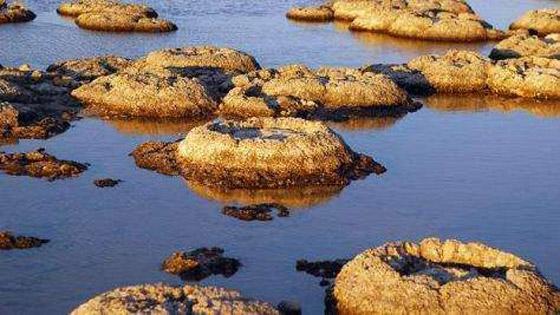 صورة رقم 2 - ستروماتوليت.. كيف حوت أحافير صخرية أقدم أشكال الحياة على الأرض؟