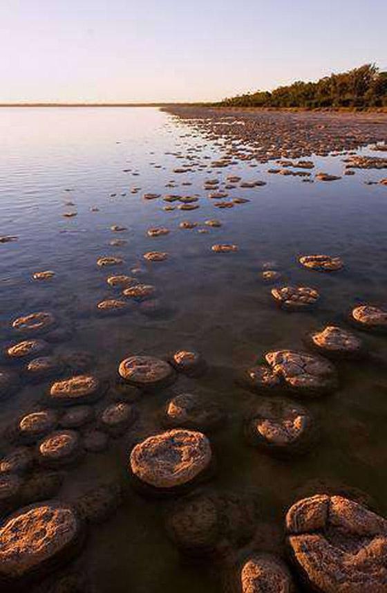 صورة رقم 5 - ستروماتوليت.. كيف حوت أحافير صخرية أقدم أشكال الحياة على الأرض؟