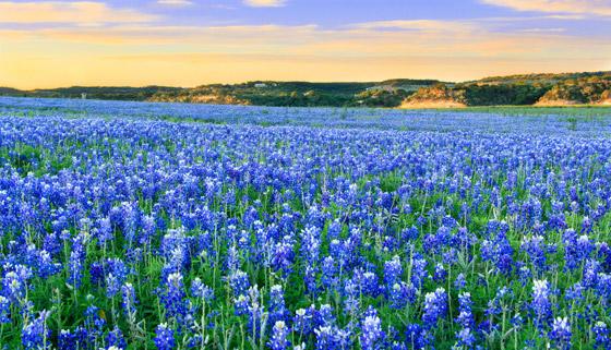 صورة رقم 2 - حقول ملونة ورائعة.. تعرفوا إلى أفضل وأجمل حدائق الزهور في العالم
