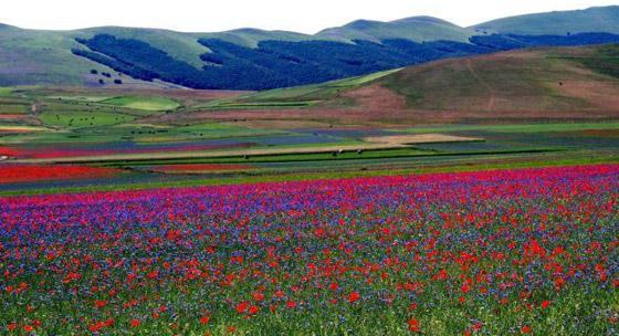 صورة رقم 4 - حقول ملونة ورائعة.. تعرفوا إلى أفضل وأجمل حدائق الزهور في العالم