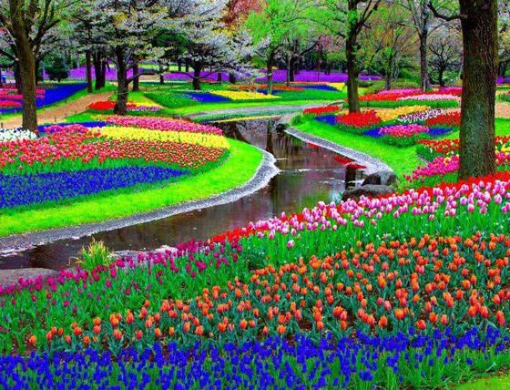 صورة رقم 5 - حقول ملونة ورائعة.. تعرفوا إلى أفضل وأجمل حدائق الزهور في العالم