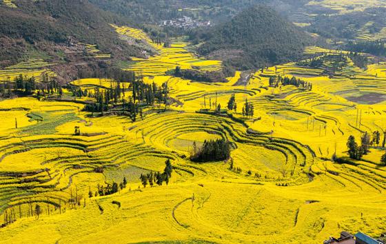 صورة رقم 7 - حقول ملونة ورائعة.. تعرفوا إلى أفضل وأجمل حدائق الزهور في العالم
