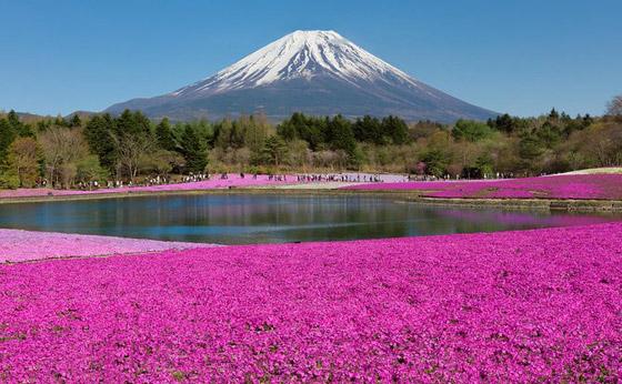 صورة رقم 9 - حقول ملونة ورائعة.. تعرفوا إلى أفضل وأجمل حدائق الزهور في العالم
