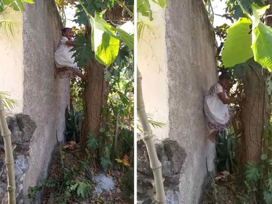 صورة رقم 4 - فيديو وصور عجوز مكسيكية (88 عاما) تتسلق الأشجار بلياقة مذهلة لتجني الفاكهة لتبيعها وتقطع الخشب