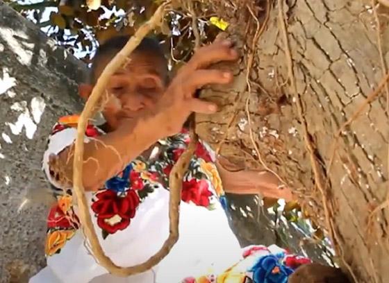 صورة رقم 5 - فيديو وصور عجوز مكسيكية (88 عاما) تتسلق الأشجار بلياقة مذهلة لتجني الفاكهة لتبيعها وتقطع الخشب