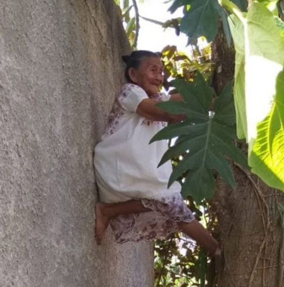 صورة رقم 6 - فيديو وصور عجوز مكسيكية (88 عاما) تتسلق الأشجار بلياقة مذهلة لتجني الفاكهة لتبيعها وتقطع الخشب