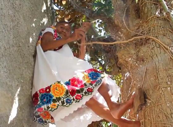 صورة رقم 1 - فيديو وصور عجوز مكسيكية (88 عاما) تتسلق الأشجار بلياقة مذهلة لتجني الفاكهة لتبيعها وتقطع الخشب
