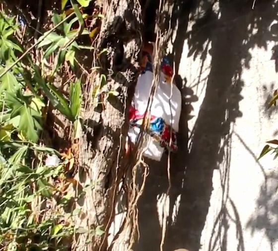 صورة رقم 7 - فيديو وصور عجوز مكسيكية (88 عاما) تتسلق الأشجار بلياقة مذهلة لتجني الفاكهة لتبيعها وتقطع الخشب