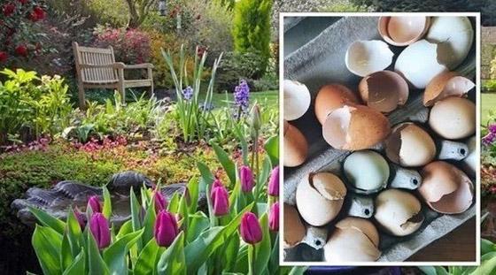 صورة رقم 3 - كيف تستخدم قشور البيض وبقايا القهوة في حديقتك؟