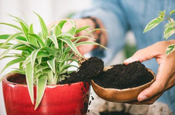 صورة رقم 5 - كيف تستخدم قشور البيض وبقايا القهوة في حديقتك؟