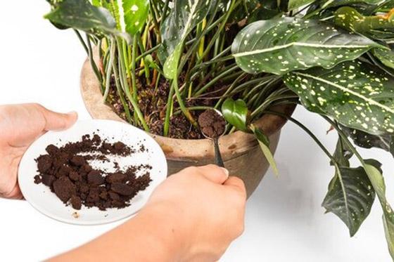صورة رقم 8 - كيف تستخدم قشور البيض وبقايا القهوة في حديقتك؟