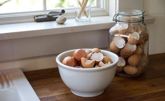 صورة رقم 9 - كيف تستخدم قشور البيض وبقايا القهوة في حديقتك؟