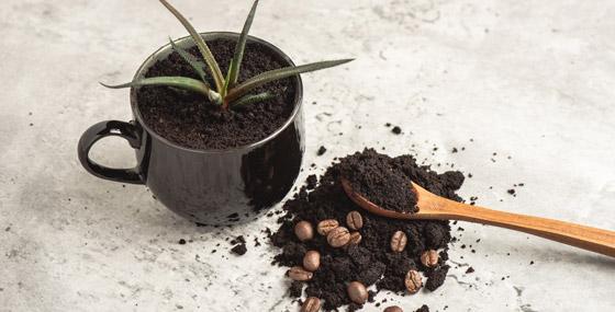 صورة رقم 10 - كيف تستخدم قشور البيض وبقايا القهوة في حديقتك؟