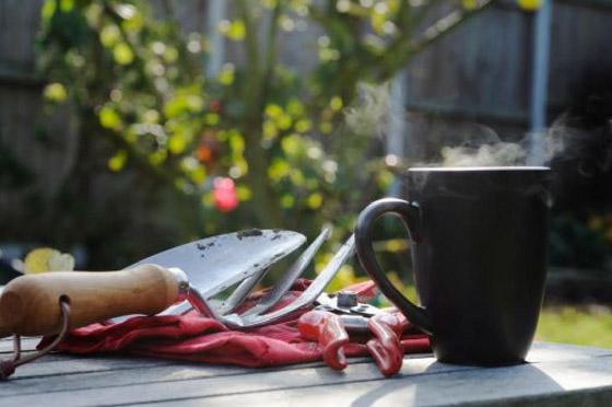 صورة رقم 11 - كيف تستخدم قشور البيض وبقايا القهوة في حديقتك؟