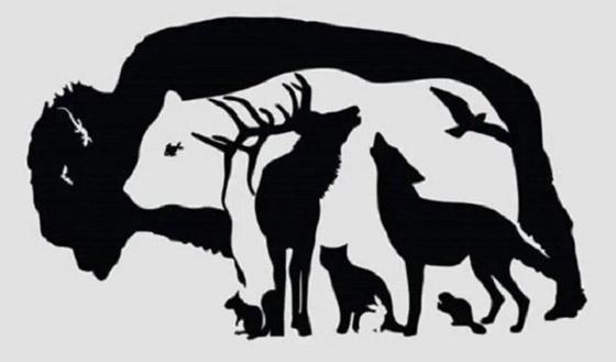 صورة رقم 1 - ما هو الحيوان الذي تراه؟ اختبار شخصية يكشف درجة الذكاء في العلاقات