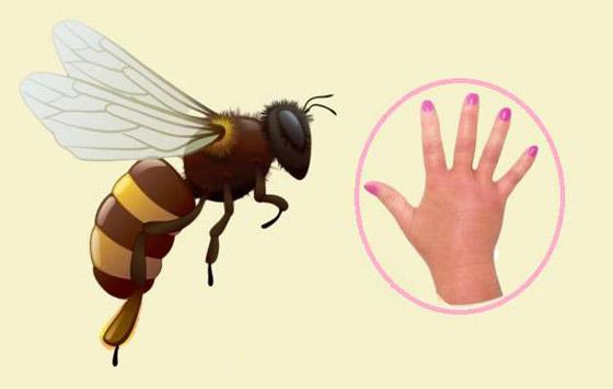 صورة رقم 1 - البعوض.. وأشهر الحشرات اللادغة وأعراض الإصابة