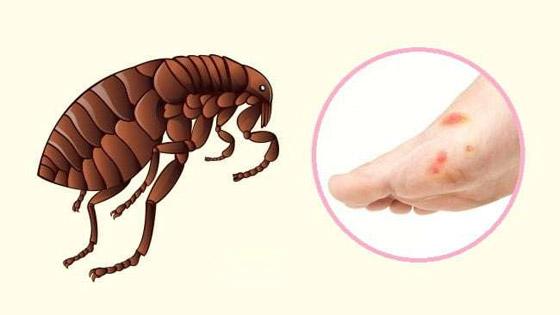 صورة رقم 6 - البعوض.. وأشهر الحشرات اللادغة وأعراض الإصابة