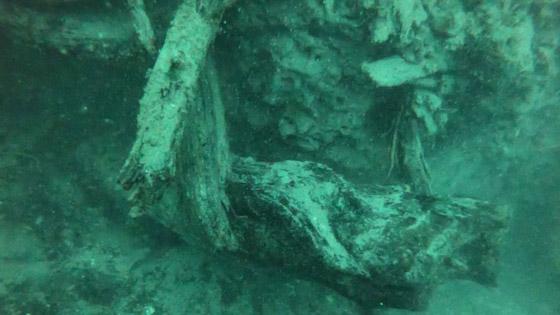 صورة رقم 3 - غابة السرو القديمة.. غابات غريبة قديمة تحت الماء