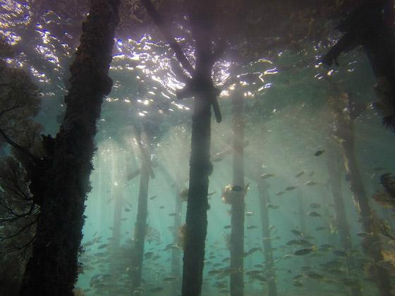 صورة رقم 10 - غابة السرو القديمة.. غابات غريبة قديمة تحت الماء