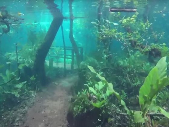 صورة رقم 5 - غابة السرو القديمة.. غابات غريبة قديمة تحت الماء