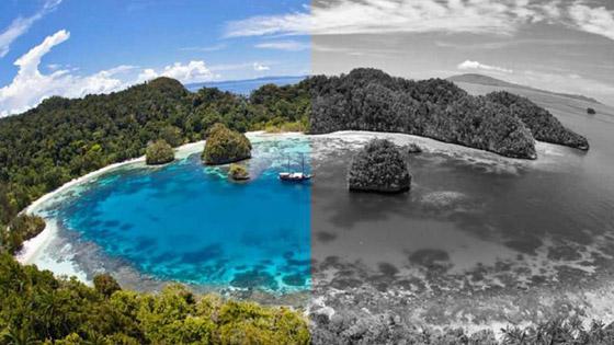 صورة رقم 1 - ينجيلاب.. جزيرة غريبة لا يرى سكانها إلا باللون الأبيض والأسود