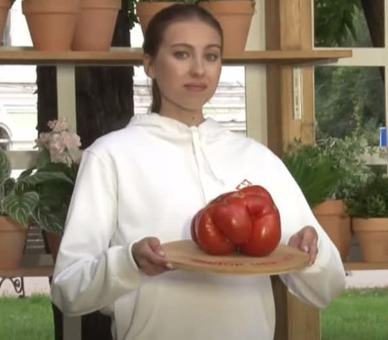 صورة رقم 4 - روسيا تسجل أكبر حبة طماطم بوزن 2.2 كيلو غرام.. صور