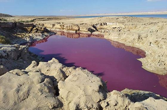 صورة رقم 1 - ضجة في الأردن.. بركة حمراء غريبة بجانب البحر الميت!