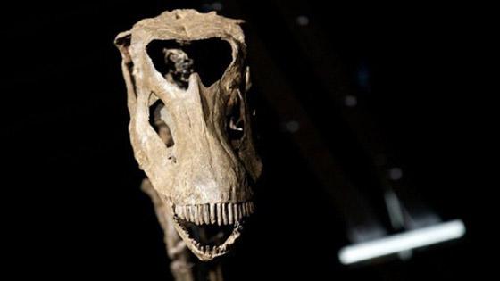 صورة رقم 4 - أسنان كبيرة وفك قوي.. ليبي يعثر على ديناصور بالصحراء