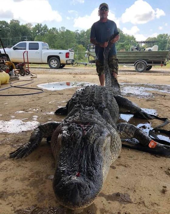 صورة رقم 5 - صور: صياد أمريكي يعثر على معدات عمرها آلاف السنين في بطن تمساح