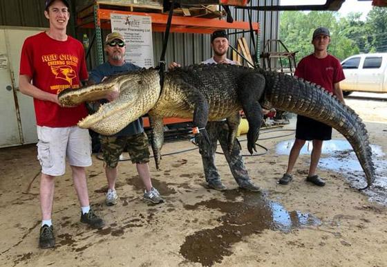 صورة رقم 6 - صور: صياد أمريكي يعثر على معدات عمرها آلاف السنين في بطن تمساح