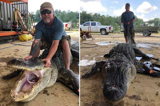 صورة رقم 8 - صور: صياد أمريكي يعثر على معدات عمرها آلاف السنين في بطن تمساح