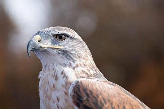 صورة رقم 6 - أبو قرن ذو الخوذة.. وأغرب الطيور في العالم
