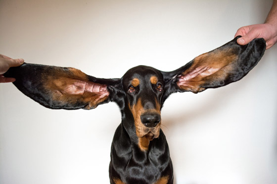 صورة رقم 8 - صور أبرز أرقام قياسية بموسوعة جينيس الجديدة: اكبر قدم، اطول اذن وأسرع شقلبة!