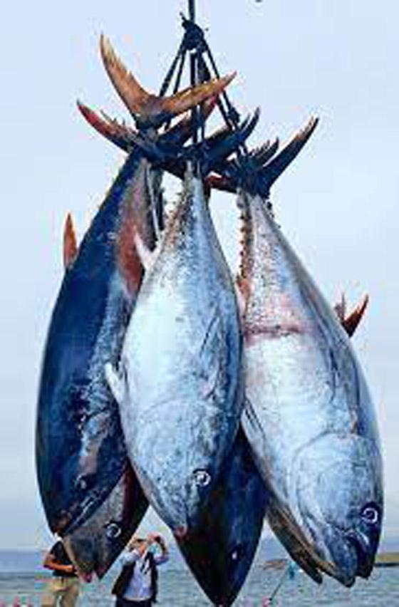4 أنواع من الأسماك ستمنعك من إنقاص الوزن صورة رقم 5