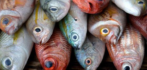 4 أنواع من الأسماك ستمنعك من إنقاص الوزن صورة رقم 4