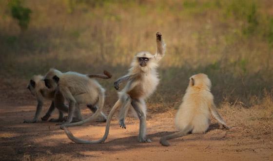 صورة رقم 4 - مسابقة كوميديا الحياة البرية 2021: لن تتوقف عن الضحك بعد مشاهدة الصور