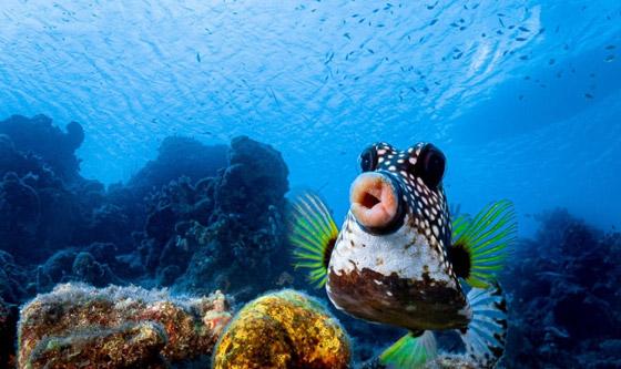 صورة رقم 5 - مسابقة كوميديا الحياة البرية 2021: لن تتوقف عن الضحك بعد مشاهدة الصور