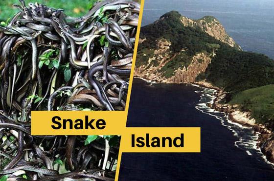 دخولها يحتاج لإذن رسمي من الحكومة.. تعرفوا على أخطر جزيرة في العالم صورة رقم 6