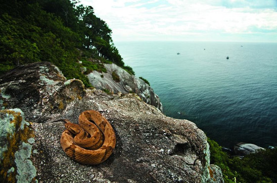 دخولها يحتاج لإذن رسمي من الحكومة.. تعرفوا على أخطر جزيرة في العالم صورة رقم 4