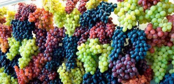 صورة رقم 3 - العنب الفاتح أم الداكن..أيهما أكثر فائدة للصحة؟