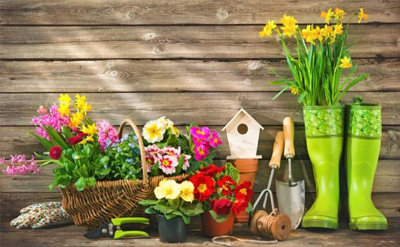 صورة رقم 6 - إليكم أفضل 5 نباتات منزلية عطرية مزهرة ستملأ رائحتها البيت كله