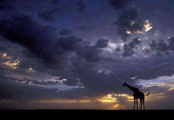 الغروب في براري أفريقيا