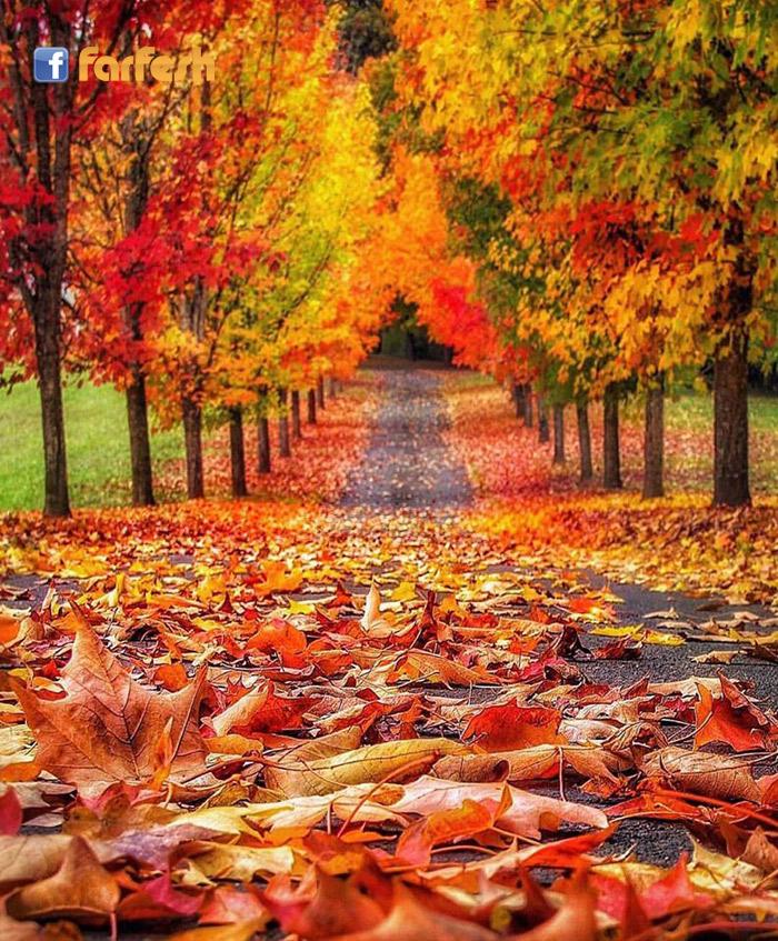 Fall Pics Wallpaper: فرفش بلس لوحة رائعة من فصل الخريف