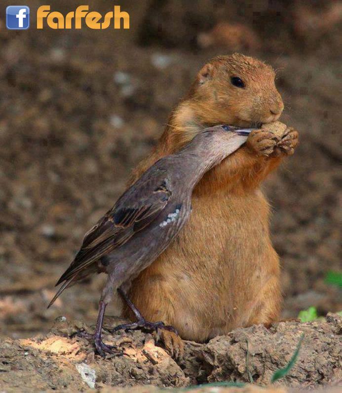 الرحمه بين الحيوانات وتقاسم الطعام فيما بينهم مواضيع ذات صلةلتقوية