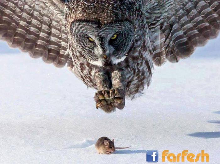 لقطه فى غايه الروعه لبومه تطارد فأر