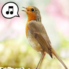 لماذا تغرد الطيور وتزقزق العصافير باكرا؟